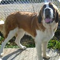 Adopt A Pet :: Anouk - Cornwall, ON