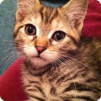 Adopt A Pet :: Beanie - Trevose, PA
