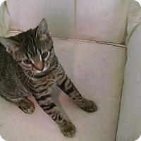 Adopt A Pet :: Tigger - Davison, MI