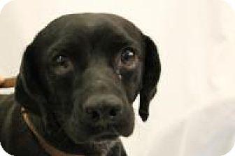 Beagle Mix Dog for adoption in Huachuca City, Arizona - Ramsey