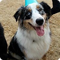 Adopt A Pet :: Legend - Knoxville, TN