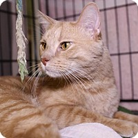 Adopt A Pet :: Pete - Winston-Salem, NC