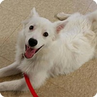 Adopt A Pet :: Bolt of Dayton, Ohio - Lindsey, OH