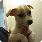 Adopt A Pet :: Baby Meeny
