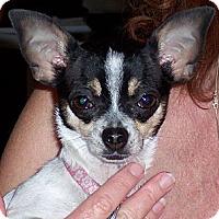 Adopt A Pet :: Tula - Tucson, AZ