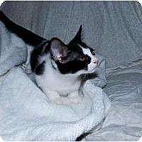 Adopt A Pet :: Cutie - New Egypt, NJ