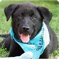Adopt A Pet :: COLE - Wakefield, RI