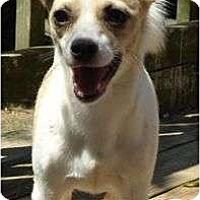 Adopt A Pet :: Bailey - P, ME