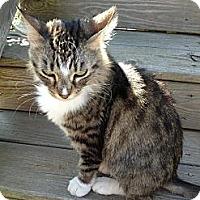 Adopt A Pet :: *Kittie - Winder, GA