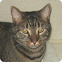 Adopt A Pet :: STITCH - 2014 - Hamilton, NJ