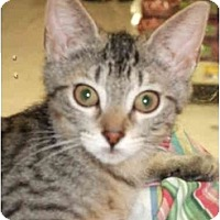 Adopt A Pet :: Ms. Snickey - Fort Lauderdale, FL