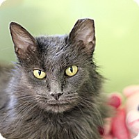 Adopt A Pet :: Miss Dusty - Chicago, IL