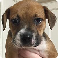 Adopt A Pet :: Calypso#04F - Orlando, FL