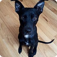 Adopt A Pet :: I'm a tripod!  Leander - North Bend, WA