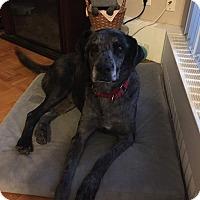 Adopt A Pet :: Dahlia - Mount Hope, ON