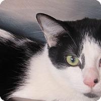 Adopt A Pet :: Pepito - Sierra Vista, AZ