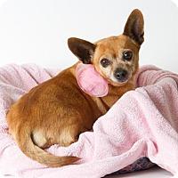 Adopt A Pet :: CARMEL ANN - Sacramento, CA