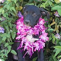 Adopt A Pet :: Jalapeno - Chandler, AZ