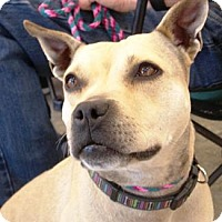 Adopt A Pet :: Daisy - Castro Valley, CA