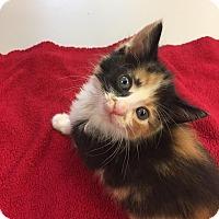Adopt A Pet :: MaryAnn - Richmond, VA