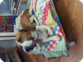 Basset Hound/Hound (Unknown Type) Mix Dog for adoption in Marietta, Georgia - Jake