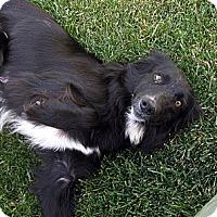 Adopt A Pet :: Feta - Oakley, CA