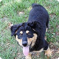 Adopt A Pet :: Jacqueline - Savannah, GA