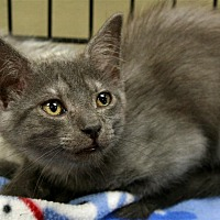 Adopt A Pet :: Bee - Fairfax Station, VA