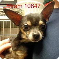 Adopt A Pet :: Hiram - Greencastle, NC