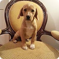 Adopt A Pet :: Shawn - Gaithersburg, MD