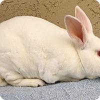 Adopt A Pet :: Tip Toe - Bonita, CA