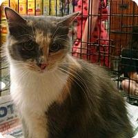 Adopt A Pet :: *Chubby - Ringoes, NJ