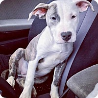 Adopt A Pet :: Nellie - Northeast, OH