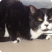 Adopt A Pet :: Marvin - Wildomar, CA