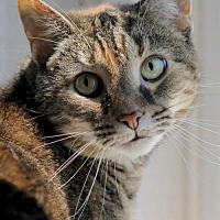 Adopt A Pet :: Muffie - Troy, IL