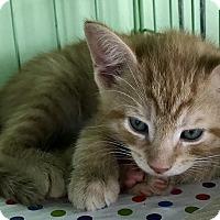 Adopt A Pet :: Pistachio - Island Park, NY