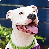 Adopt A Pet :: Banner - Houston, TX