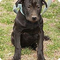 Adopt A Pet :: Luke $300 adoption fee - Staunton, VA