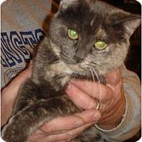 Adopt A Pet :: Dora - Chesapeake, VA