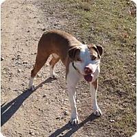 Adopt A Pet :: Aubrey - Aubrey, TX