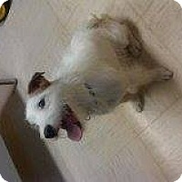 Adopt A Pet :: Junior - Alliance, NE