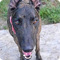 Adopt A Pet :: Robbie (Creative Rush) - Chagrin Falls, OH