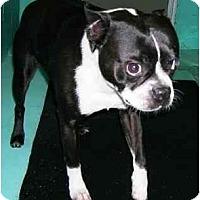 Adopt A Pet :: Forman - Fairfax, VA