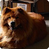 Adopt A Pet :: Nakida - Tillsonburg, ON