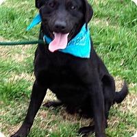 Adopt A Pet :: DANDY - Bedminster, NJ