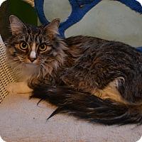 Adopt A Pet :: Bindi - Oyster Bay, NY