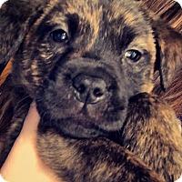 Adopt A Pet :: Felicity and Finn - EDEN PRAIRIE, MN