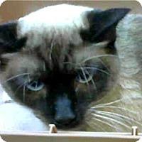 Adopt A Pet :: Rokko - LaJolla, CA