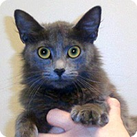 Adopt A Pet :: Fay - Wildomar, CA