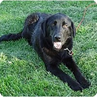 Adopt A Pet :: PENDINGEllie - Toronto/Etobicoke/GTA, ON